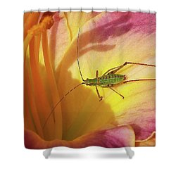 Investigating Bug Shower Curtain