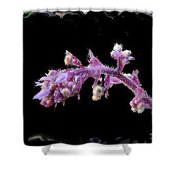 Ipomoea Batatas Shower Curtain