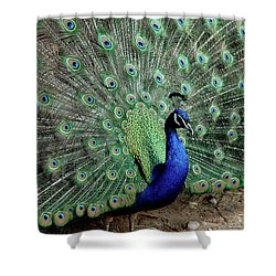 Iridescent Blue-green Peacock Shower Curtain
