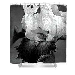 Iris 6621 H_5 Shower Curtain