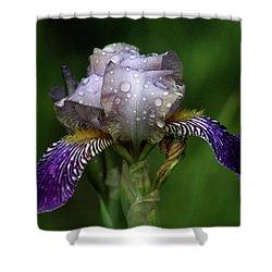 Iris After The Rain 1409 H_2 Shower Curtain