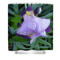Iris After The Rain IIi Shower Curtain
