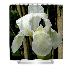 Iris After The Storm Shower Curtain by Charles Ables