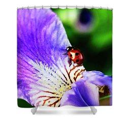 Iris And Ladybug Shower Curtain