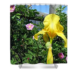 Iris And Wild Roses Shower Curtain by Will Borden