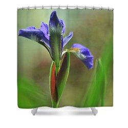 Iris Caesar's Brother Shower Curtain by Rebecca Sherman
