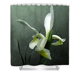 Iris Celebration Shower Curtain