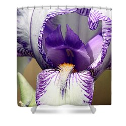 Shower Curtain featuring the photograph Iris Close-up by Sheila Brown
