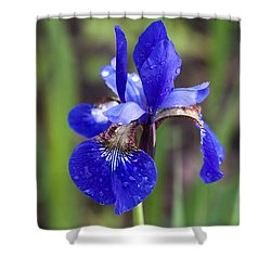 Iris Shower Curtain by Dan Hefle