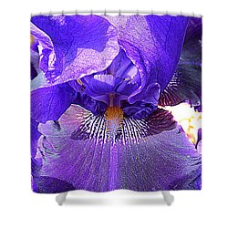 Iris Garden 16 Shower Curtain by Randall Weidner