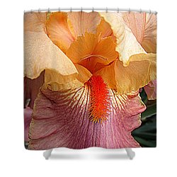Iris Garden 19 Shower Curtain by Randall Weidner