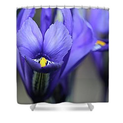 Iris Harmony Shower Curtain