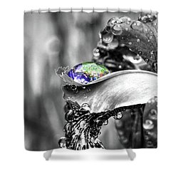 Iris In Black And Color Shower Curtain