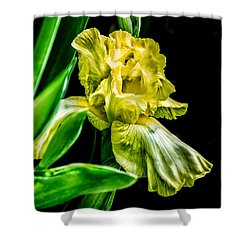 Iris In Bloom Shower Curtain