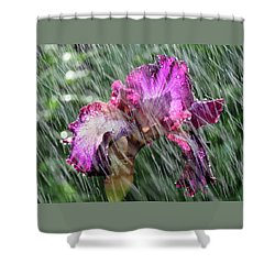 Iris In The Rain - Beauty In The Garden Shower Curtain