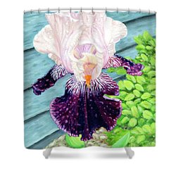 Iris In The Spring Rain Shower Curtain
