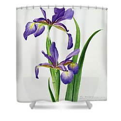 Iris Monspur Shower Curtain by Anonymous