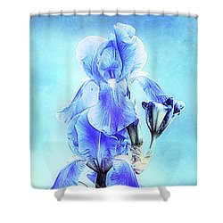 Iris Pair In Blue Shower Curtain