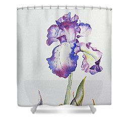 Iris Passion Shower Curtain