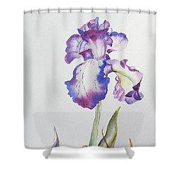 Iris Passion Shower Curtain