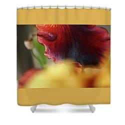 Iris Petals 2 -  Shower Curtain