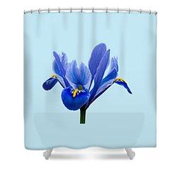 Iris Recticulata Transparent Background Shower Curtain