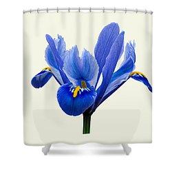 Iris Reticulata, Cream Background Shower Curtain
