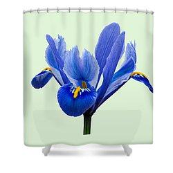 Iris Reticulata, Green Background Shower Curtain