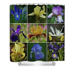 Iris Spring 2017 Collection Shower Curtain by Richard Cummings