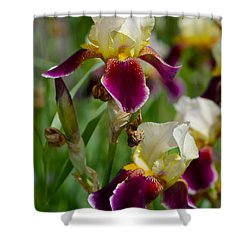 Iris Spring Shower Curtain by Karon Melillo DeVega