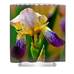 Iris Stepping Out Shower Curtain