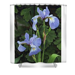 Iris Study Shower Curtain