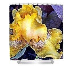 Iris Supreme Shower Curtain by Vonda Lawson-Rosa