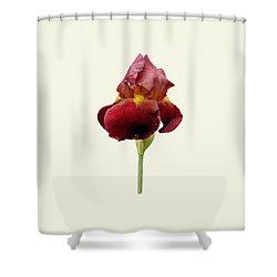 Iris Vitafire Cream Background Shower Curtain