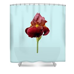 Iris Vitafire Blue Background Shower Curtain