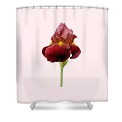 Iris Vitafire Transparent Background Shower Curtain