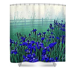 Irises At Dawn 3 Shower Curtain