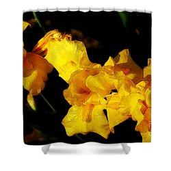Irises Shower Curtain by David Blank