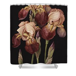Irises Shower Curtain by Jenny Barron