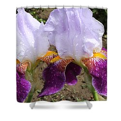 Irises Sparkling With Rain Droplets Shower Curtain