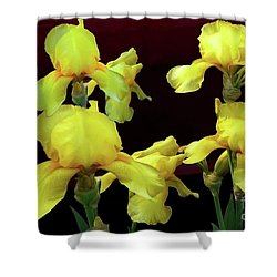 Shower Curtain featuring the photograph Irises Yellow by Jasna Dragun