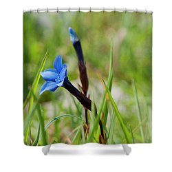 Shower Curtain featuring the photograph Irish Gentians by Rob Hemphill