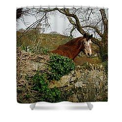 Shower Curtain featuring the photograph Irish Roan by Kathleen Scanlan