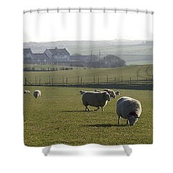 Irish Sheep Farm I Shower Curtain