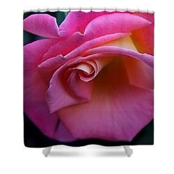 Shower Curtain featuring the photograph Irresistible by Michiale Schneider