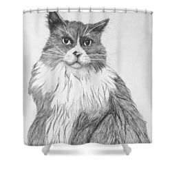 Shower Curtain featuring the drawing Is It Dinner Time by John Stuart Webbstock