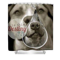 Shower Curtain featuring the digital art Is This Destiny by Kathy Tarochione