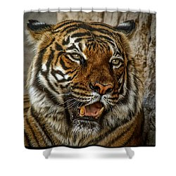 Shower Curtain featuring the photograph Is This My Best Side by Elaine Malott
