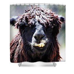Shower Curtain featuring the photograph Is Your Mama A Llama? by Anthony Jones