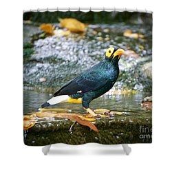 Shower Curtain featuring the photograph Island Beauty   by Judy Kay
